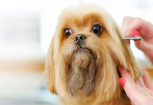 main-grooming