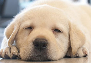 main-sleepover