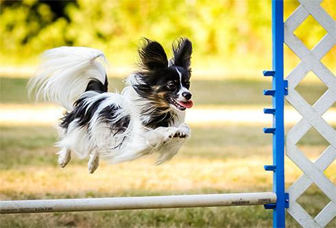 training-agility